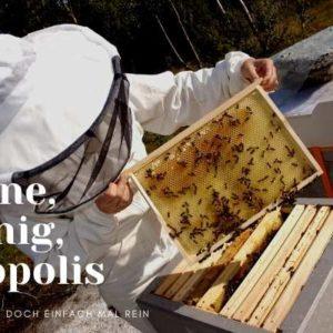 Discover Beekeeping